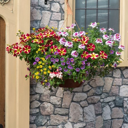 Multicolour mix - Easyplanter for hanging baskets