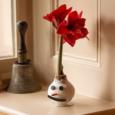 Wax Amaryllis Frosty