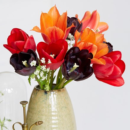 Bold and beautiful tulip collection