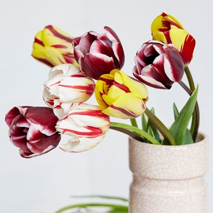 Old Master tulip collection