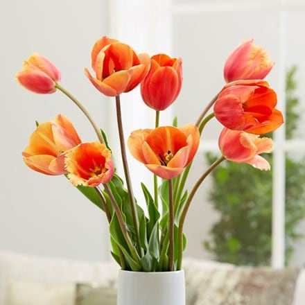 Citrus burst tulip collection