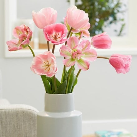 Pastel pink tulip collection