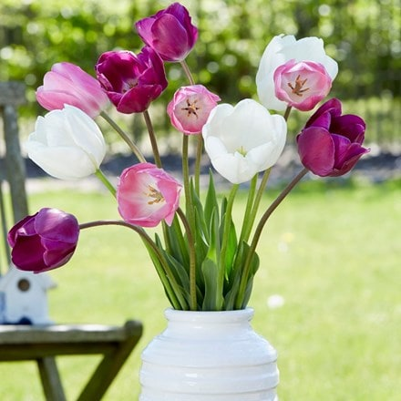 Spring fresh tulip collection