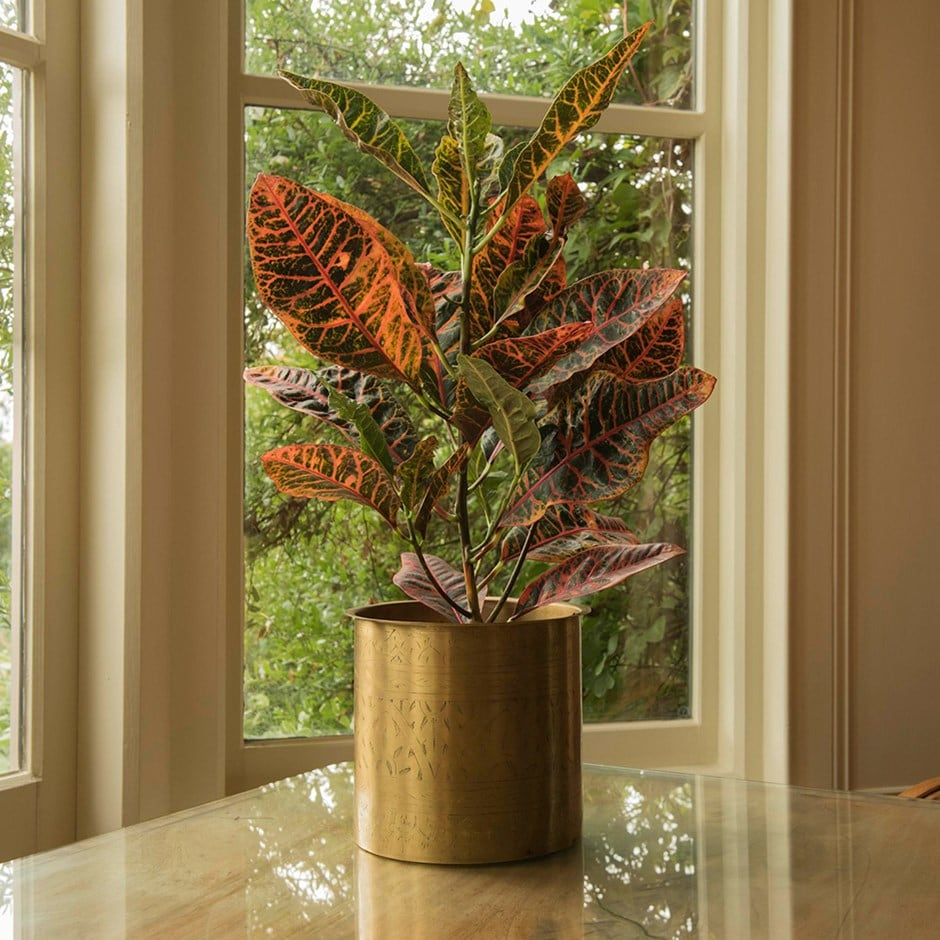 croton - Codiaeum 'Excellent' and hand etched brass planter