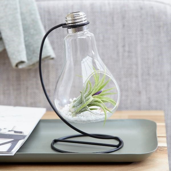 Buy Air Plant Light Bulb Style Vase Tillandsia In A Light Bulb