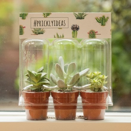 Gift pack of three succulents