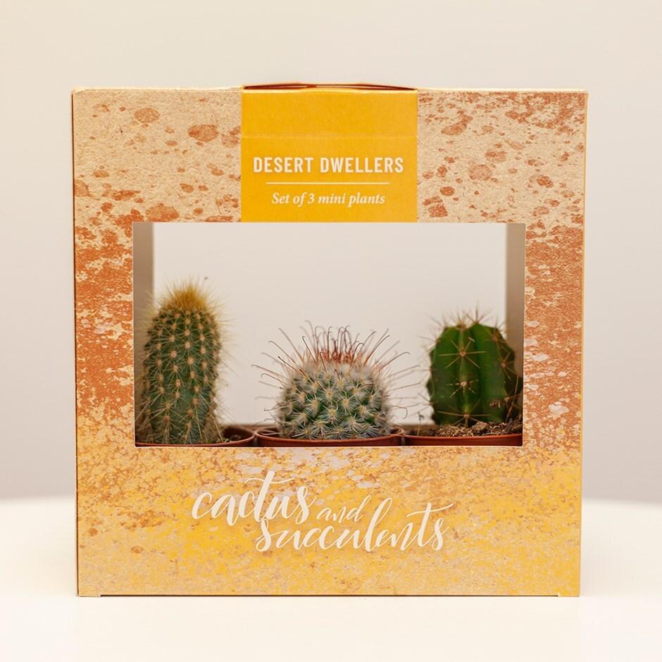 Buy Cactus Gift Set Gift Box Of Three Cactus: £14.99