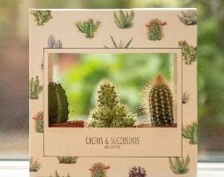 Gift box of three cactus