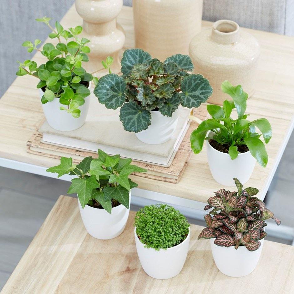 terrarium plant collection