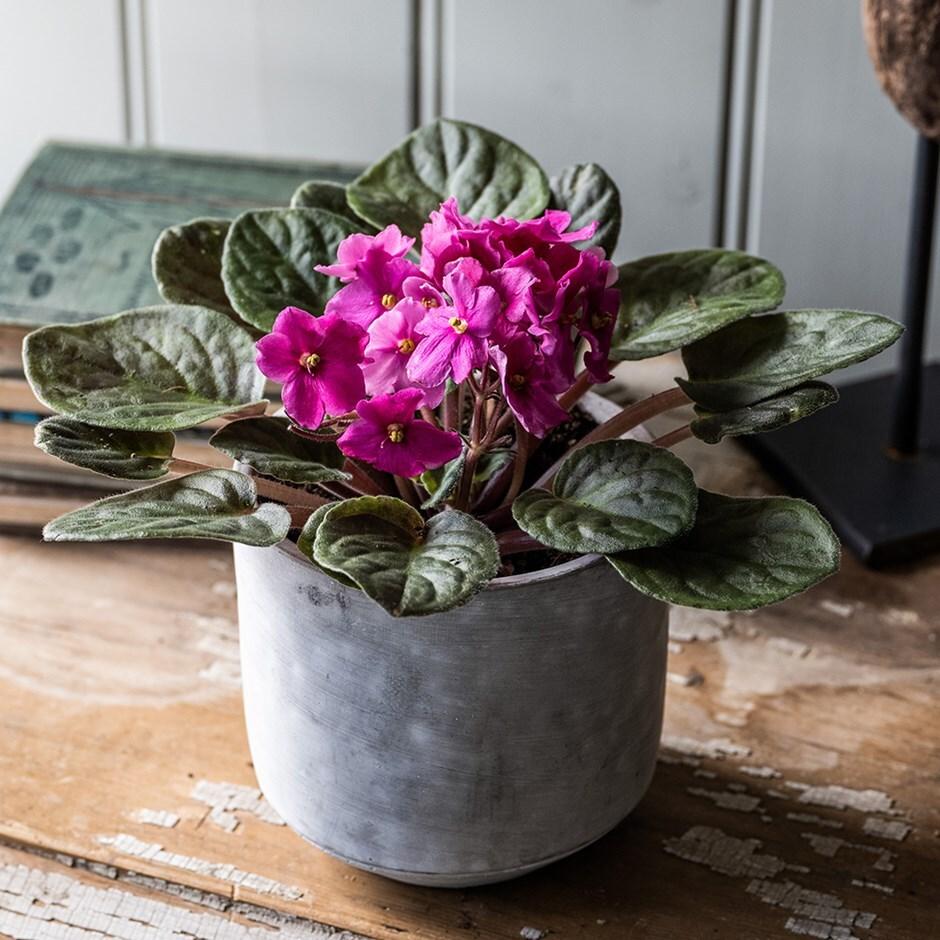 Outdoor Plant Arrangements