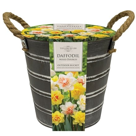 Outdoor metal bucket daffodils