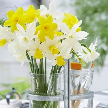 Dainty daffodil collection