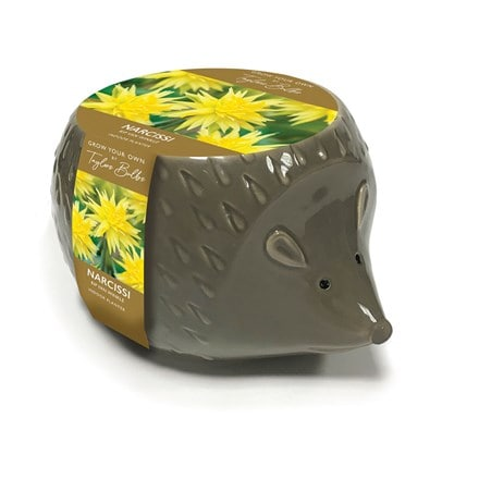 Novelty Hedgehog planter