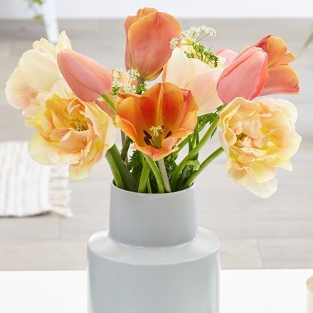 Charming apricot tulip collection