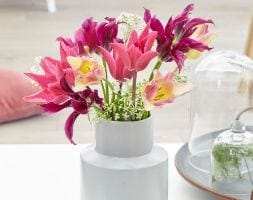 Bright & breezy tulip collection