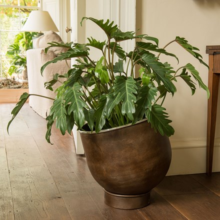Philodendron xanadu & aluminium urb pot - low combination