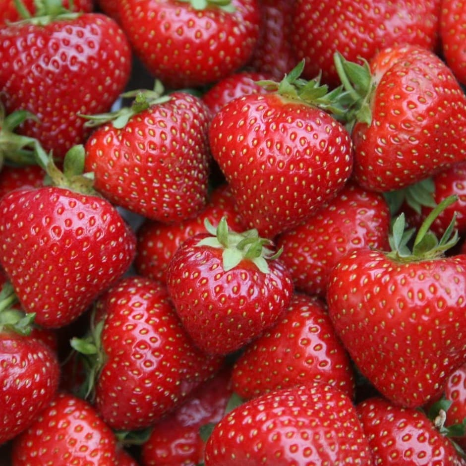 strawberry 'Sonata' (PBR)
