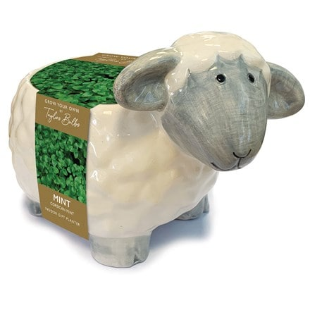 Sheep planter miniature mint
