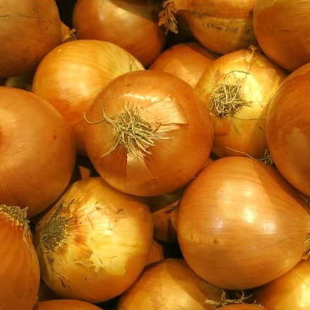 shallot Yellow Moon