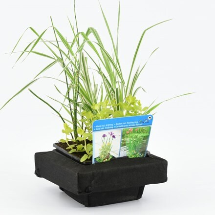 Floating island with 18cm mixed basket (plants included)