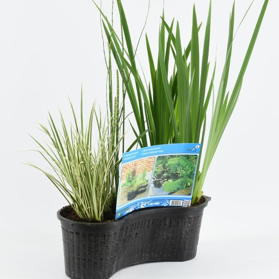 Plant basket oval 40 cm (plants included)
