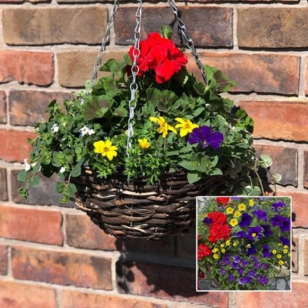 Mixed 30cm pre-planted rattan hanging basket