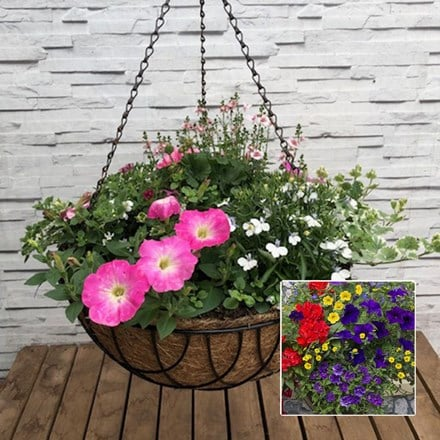 Mixed 40cm pre-planted hanging basket