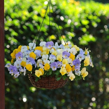 Pastel Pansies - Easyplanter for hanging baskets