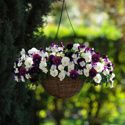 Berries & Cream - Easyplanter for hanging baskets