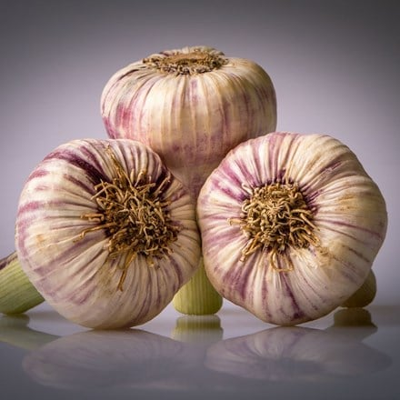 garlic Germidour