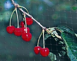 Fruit cage net