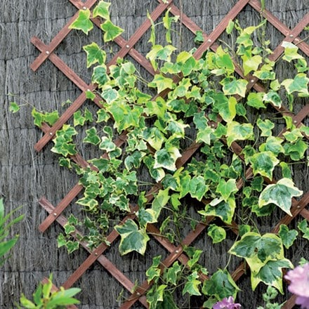 Riveted diamond trellis - brown