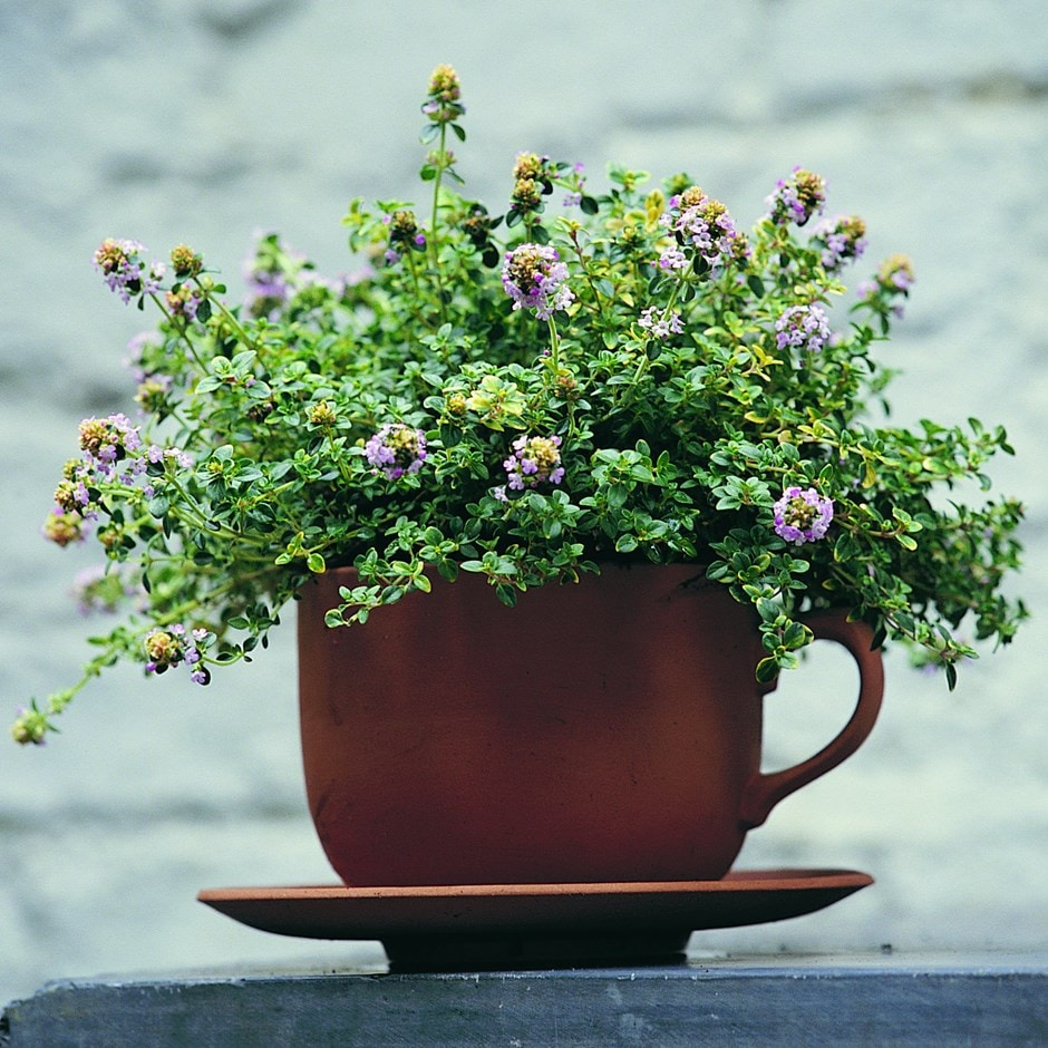 Thyme for tea terracotta teacup and saucer