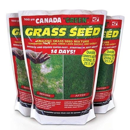 Canada green lawn seed