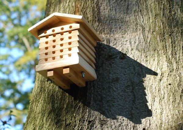 Solitary beehive habitat