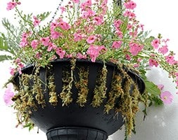 Pair of self-watering hanging baskets