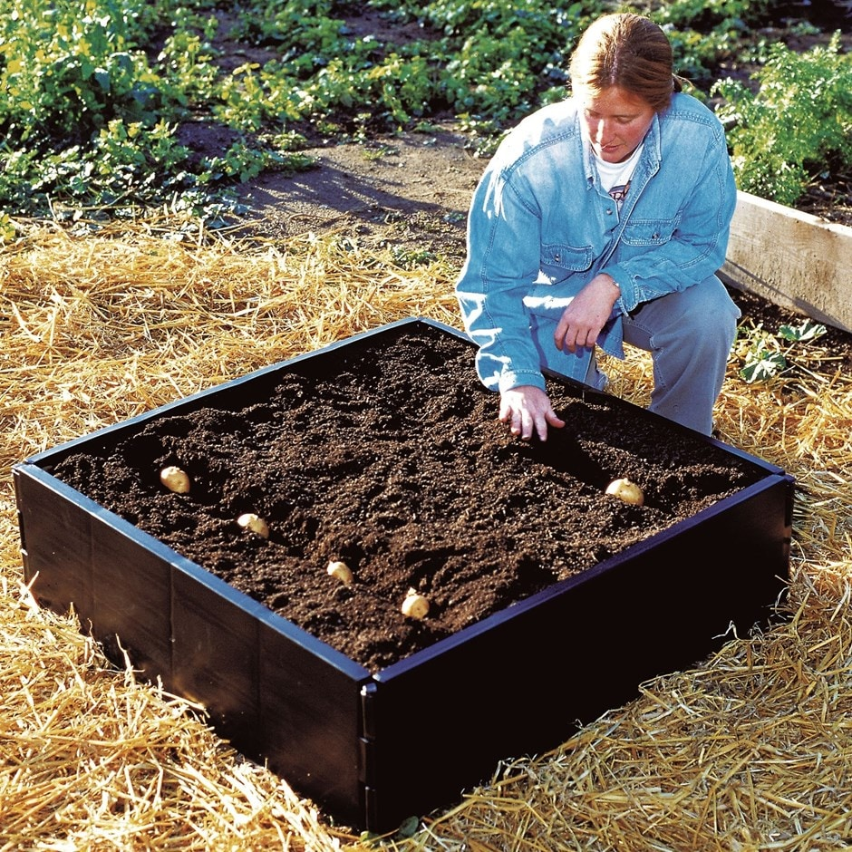 Buy Raised Bed: Delivery By Waitrose Garden