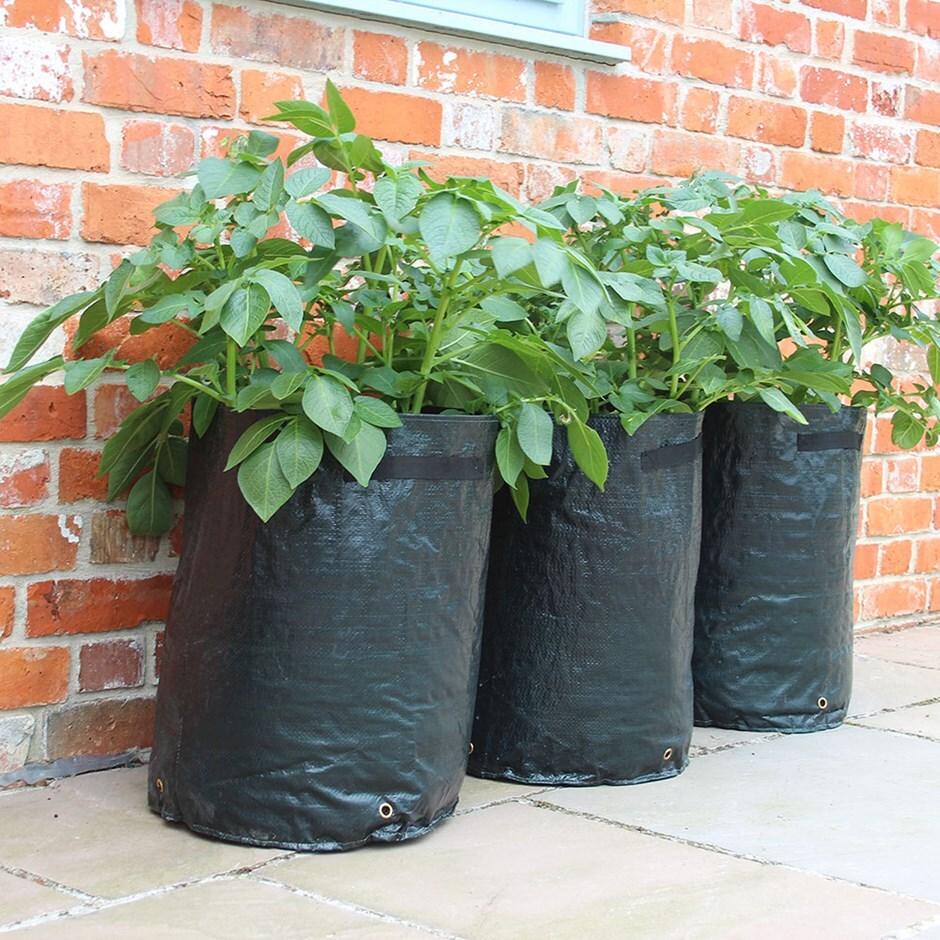 Potato planter bags 3 pack