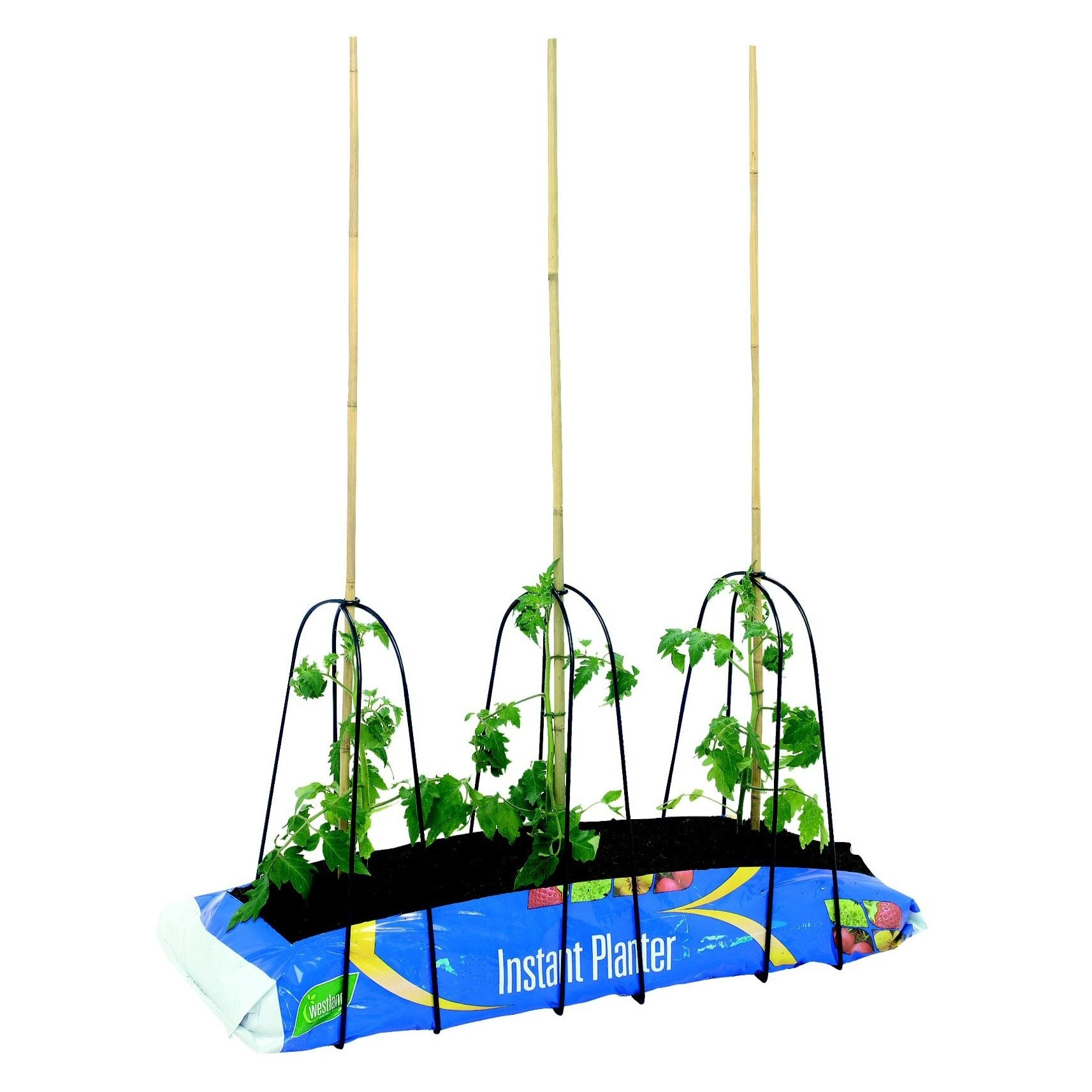 Grow-bag cane frame set