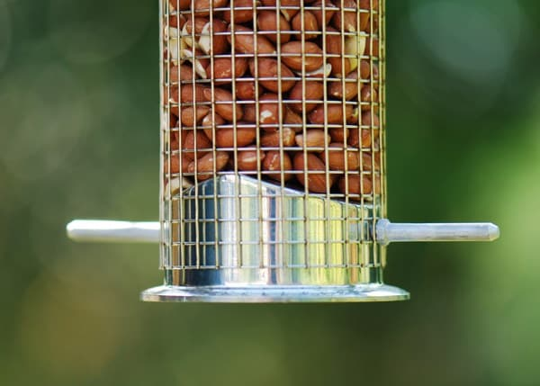 Heavy duty nut feeder