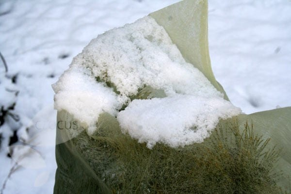 Buy Winter Fleece Plant Covers Delivery By Crocus