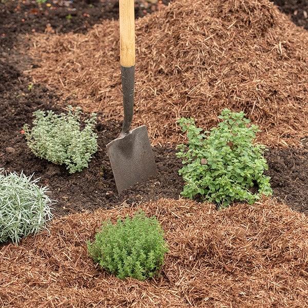 gardening novice