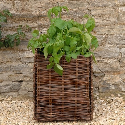 Potato planting bag with natural willow surround