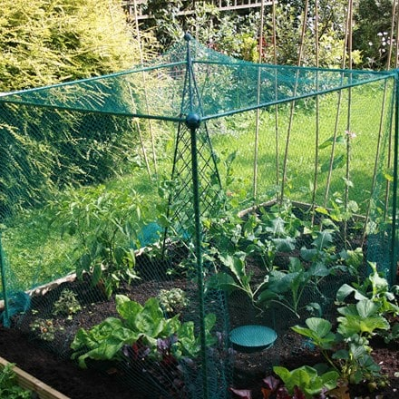Light duty fruit cage - 1.25m × 1.25m × 1.25m