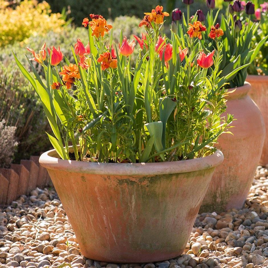 Lucca terracotta pot