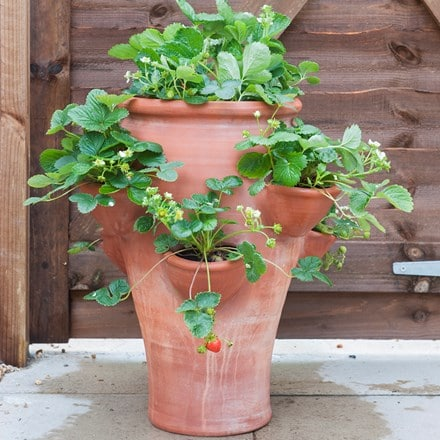 Terracotta strawberry planter