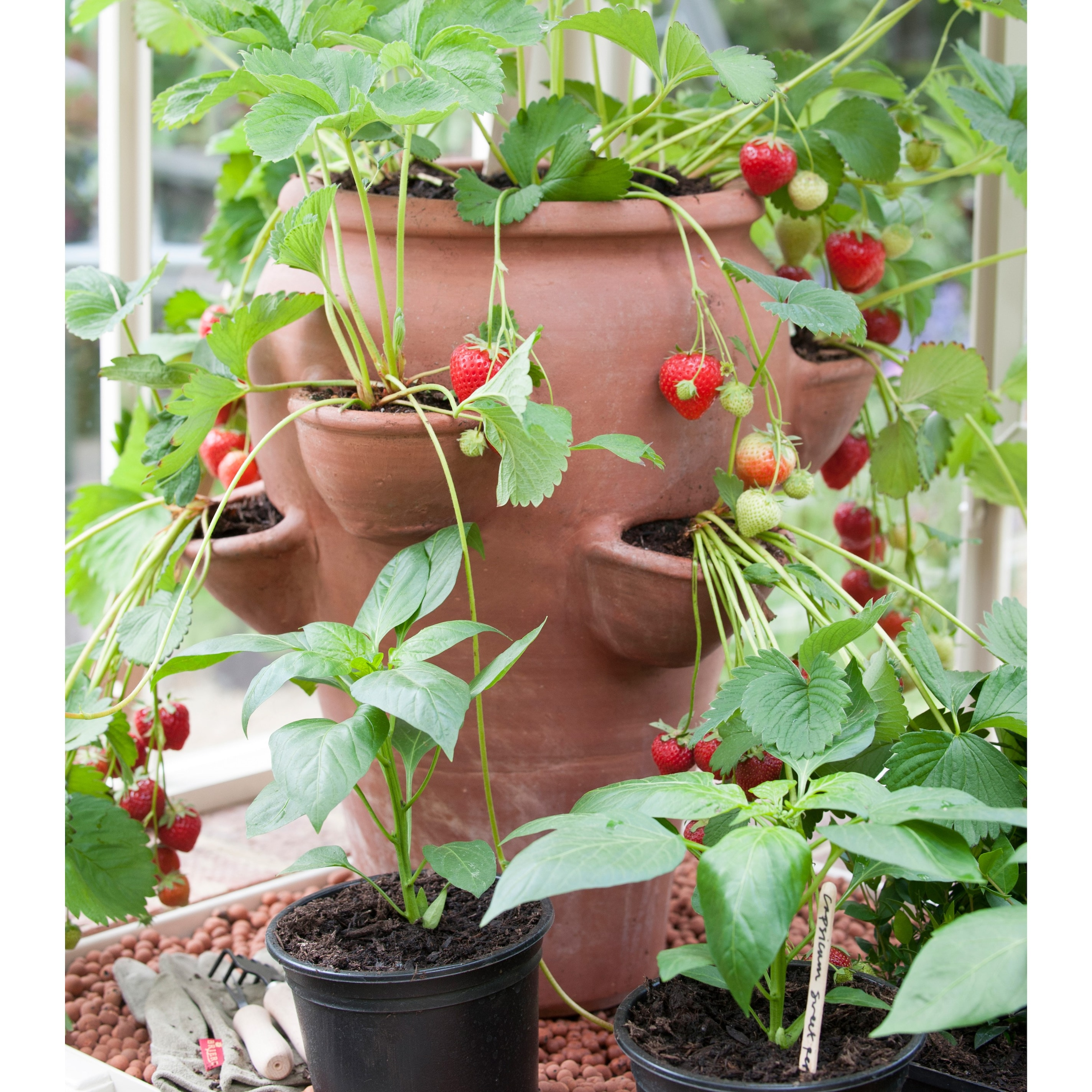Kitchen Garden Planter: Buy Terracotta Strawberry Planter: Delivery By Waitrose