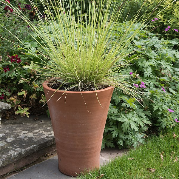 Empoli terracotta lily pot