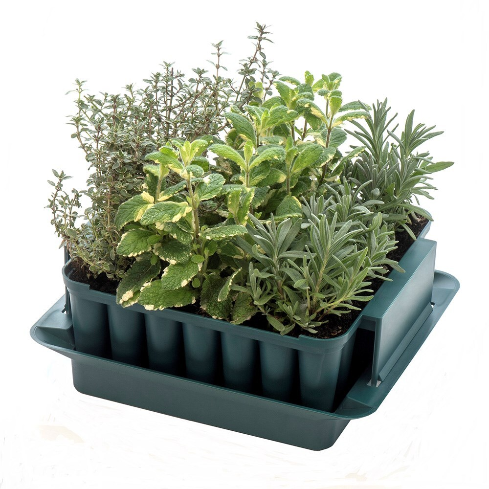 Compact plug plant trainer
