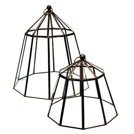 a7bc841d5c4aa Buy Cloches: Delivery by Waitrose Garden in association with Crocus